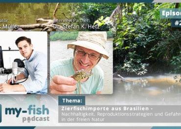 Podcast Episode #241: Zierfischimporte aus Brasilien - Nachhaltigkeit, Reproduktionsstrategien und Gefahren in der freien Natur (Dr. Stefan K. Hetz)