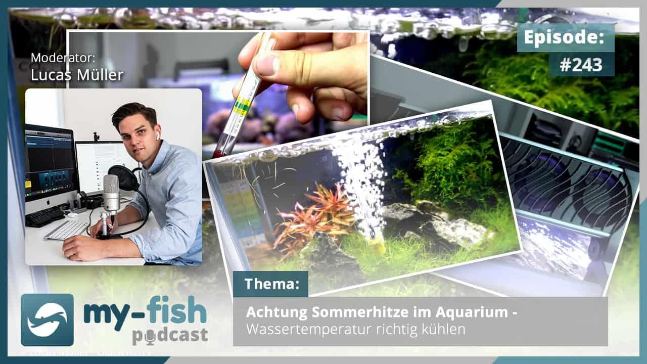 243: Achtung Sommerhitze im Aquarium - Wassertemperatur richtig kühlen 1