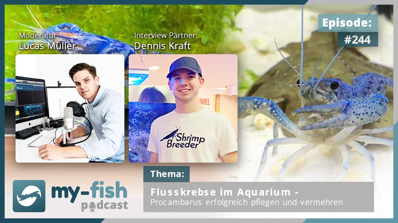 244: Flusskrebse im Aquarium - Procambarus erfolgreich pflegen und vermehren (Dennis Kraft) 1