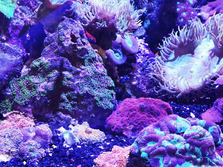 248: Das Hobby zum Beruf - Arbeiten als Außendienst in der Aquaristik (Anry Mahlow) 8