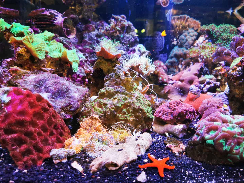 248: Das Hobby zum Beruf - Arbeiten als Außendienst in der Aquaristik (Anry Mahlow) 9