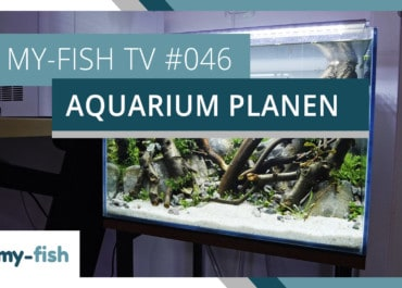 my-fish TV: Ein neues Aquarium planen