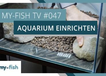 my-fish TV: Ein neues Aquarium einrichten