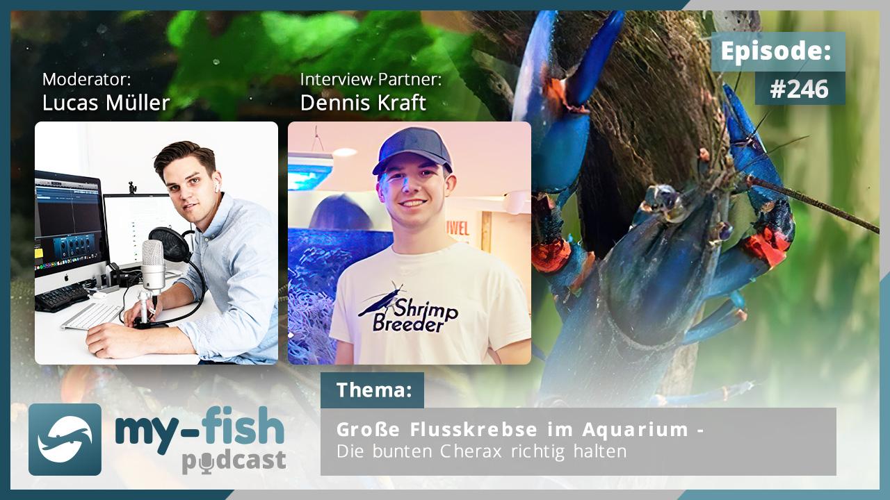 246: Große Flusskrebse im Aquarium – Die bunten Cherax richtig halten (Dennis Kraft)