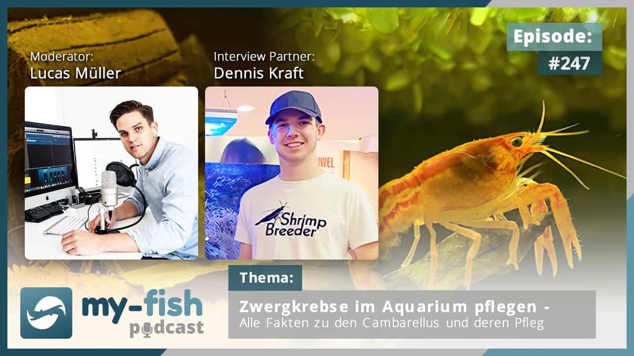 247: Zwergkrebse im Aquarium pflegen – Alle Fakten zu den Cambarellus und deren Pflege (Dennis Kraft)