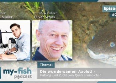 Podcast Episode #249: Die wundersamen Axolotl - Haltung und Zucht von Querzahnmolchen (Oliver Schirk)