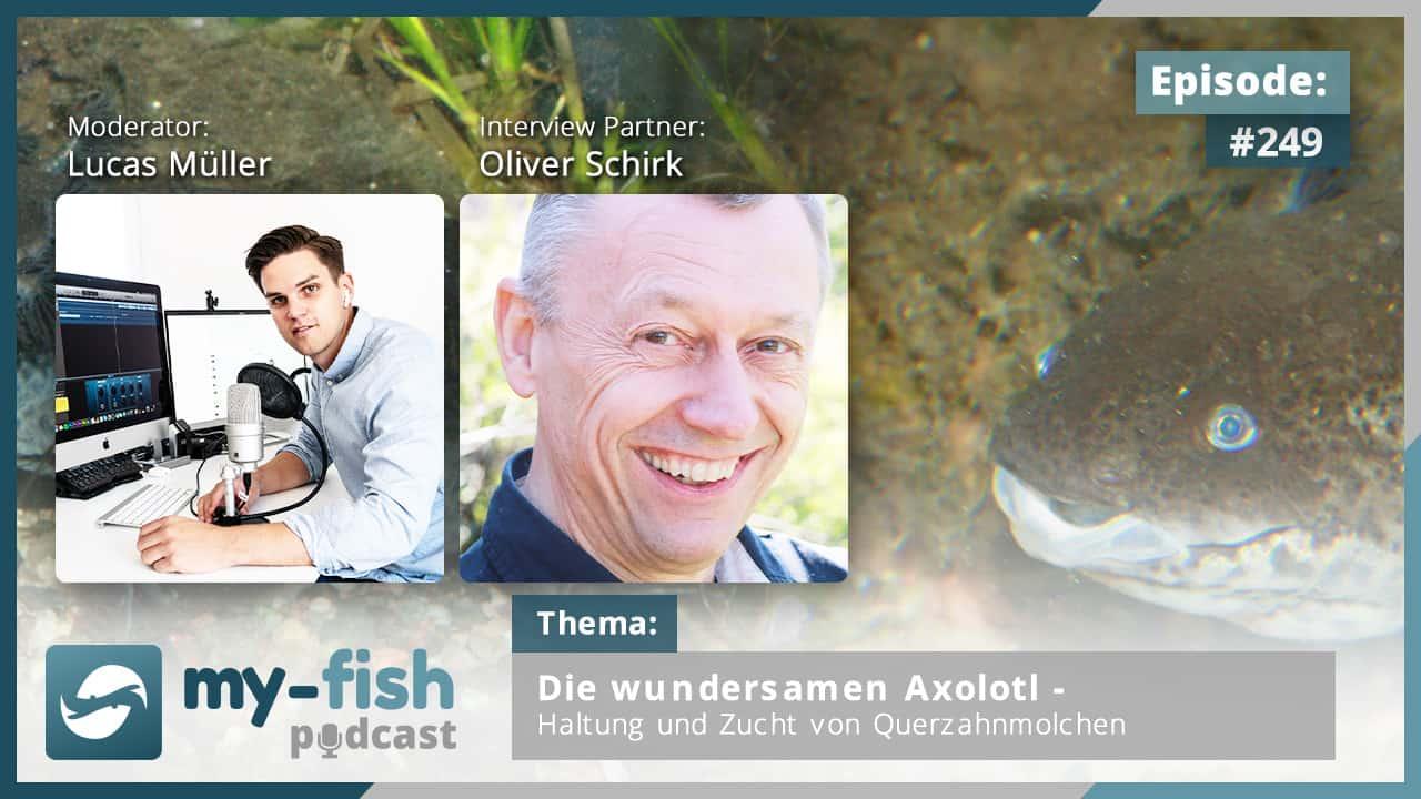 249: Die wundersamen Axolotl – Haltung und Zucht von Querzahnmolchen (Oliver Schirk)