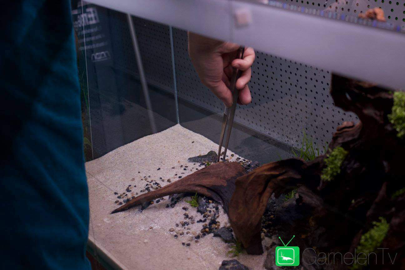250: Die 5 häufigsten Fehler bei einem neuen Aquarium - Planen, Einrichten und Loslegen ohne Pannen 2