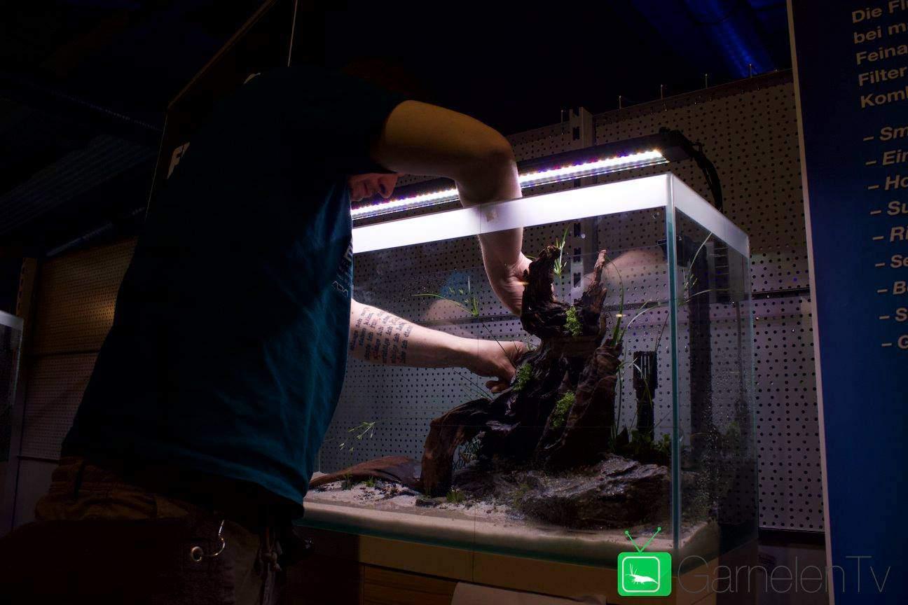 250: Die 5 häufigsten Fehler bei einem neuen Aquarium - Planen, Einrichten und Loslegen ohne Pannen 3