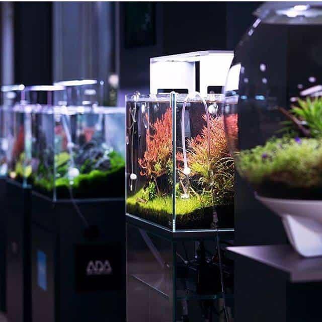 250: Die 5 häufigsten Fehler bei einem neuen Aquarium - Planen, Einrichten und Loslegen ohne Pannen 4