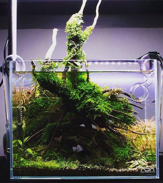 250: Die 5 häufigsten Fehler bei einem neuen Aquarium - Planen, Einrichten und Loslegen ohne Pannen 5