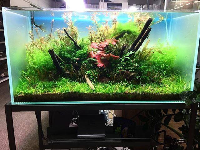 250: Die 5 häufigsten Fehler bei einem neuen Aquarium - Planen, Einrichten und Loslegen ohne Pannen 6