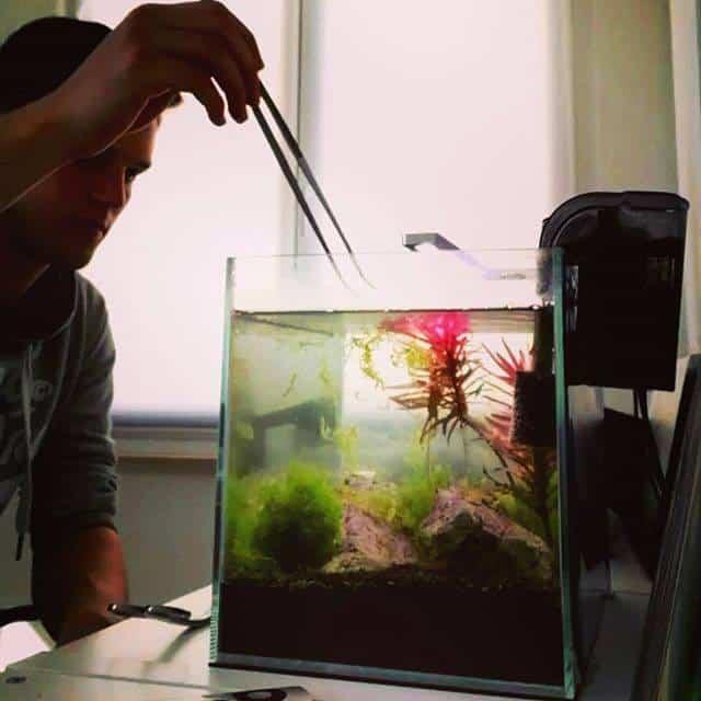 250: Die 5 häufigsten Fehler bei einem neuen Aquarium - Planen, Einrichten und Loslegen ohne Pannen 7