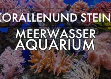 GarnelenTv: Korallen und Steine im Meerwasseraquarium