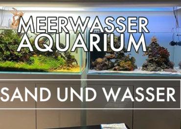 GarnelenTv: Meerwasseraquarium | Sand und Wasser