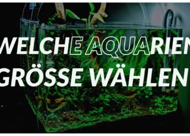 GarnelenTV: Die richtige Aquariengröße auswählen