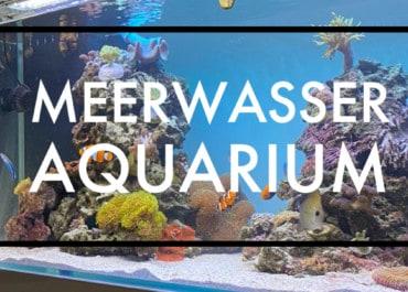 GarnelenTv: Meerwasseraquarium aufstellen | Installation Aquarium und Technik