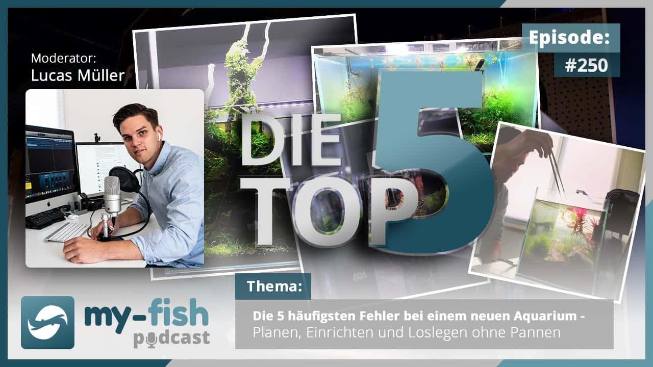 Podcast Episode #250: Die 5 häufigsten Fehler bei einem neuen Aquarium - Planen, Einrichten und Loslegen ohne Pannen 1