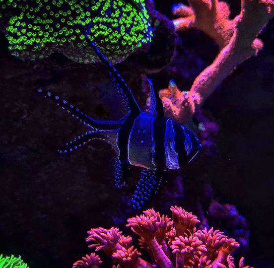 256: Der Einstieg in die Meerwasseraquaristik Teil 3 - Die Pflege der Korallen (Jannik Heidtmann) 4