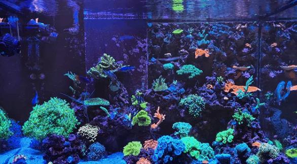 254: Der Einstieg in die Meerwasseraquaristik - Mein erstes eigenes Riffaquarium Teil 1 (Jannik Heidtmann) 4