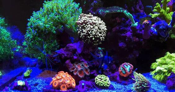 256: Der Einstieg in die Meerwasseraquaristik Teil 3 - Die Pflege der Korallen (Jannik Heidtmann) 9