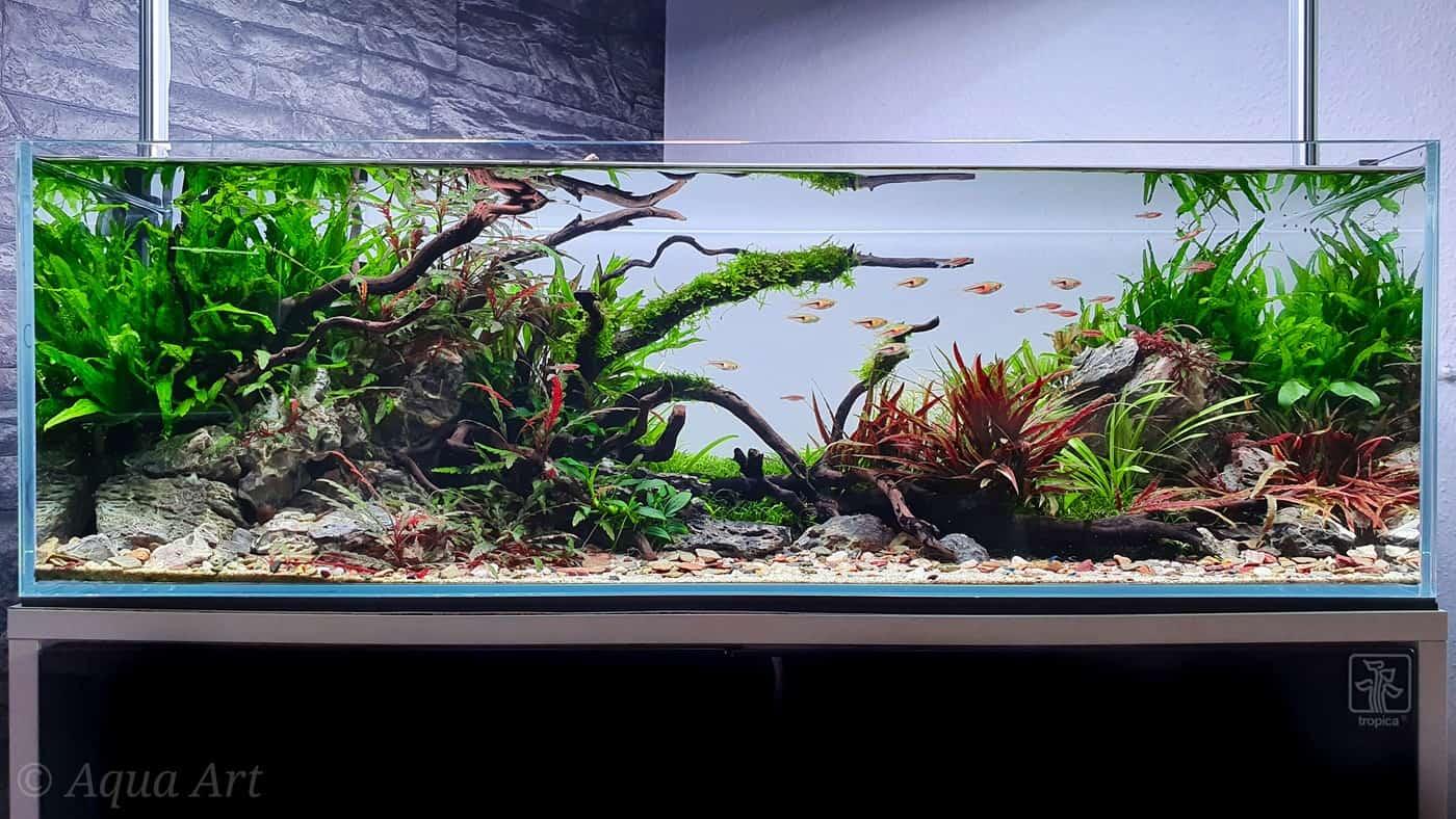Layout 120 Green River (70 L) 1