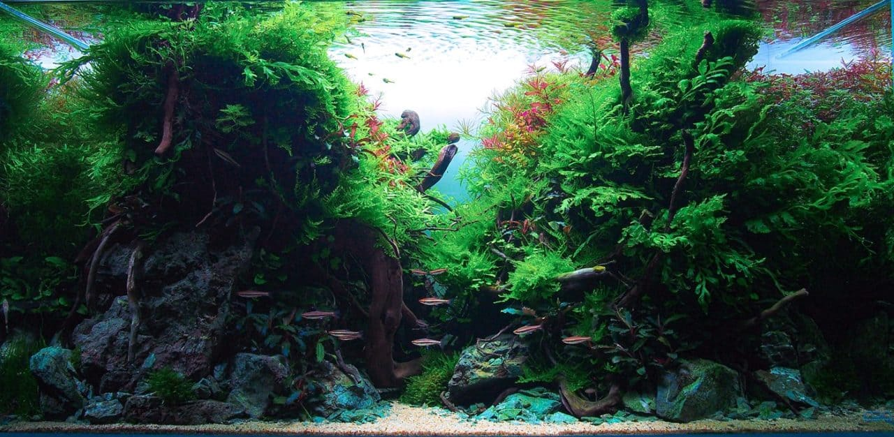 Aquarienlayouts 1