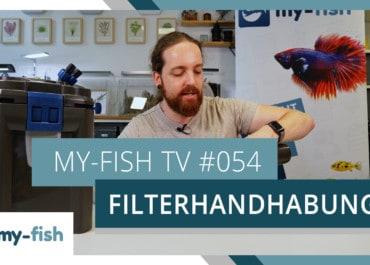 my-fish TV: Reinigung & Wartung des Filters im Aquarium