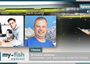 Podcast Episode #258: Artemia züchten – Urzeitkrebs und wertvolles Futter für Fische (Kai A. Quante)