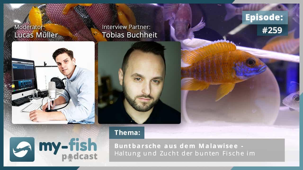Podcast Episode #259: Buntbarsche aus dem Malawisee - Haltung und Zucht der bunten Fische im Aquarium (Tobias Buchheit) 1