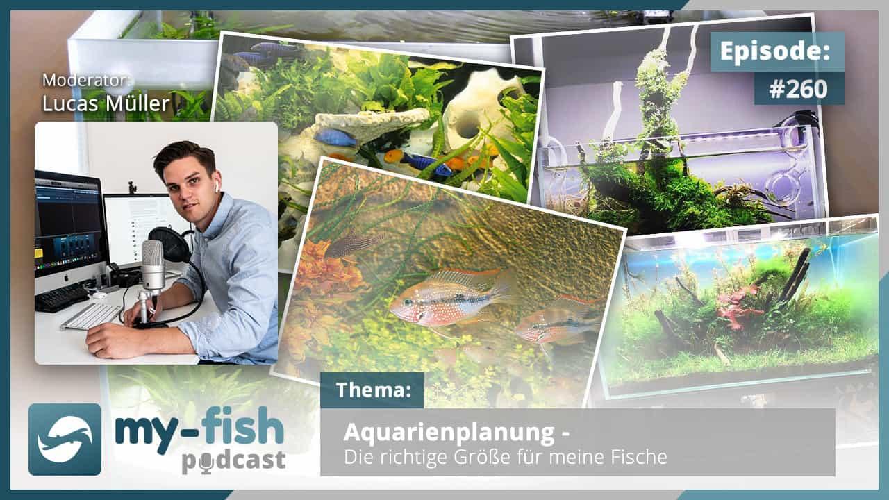 260: Aquarienplanung - Die richtige Größe für deine Fische 1