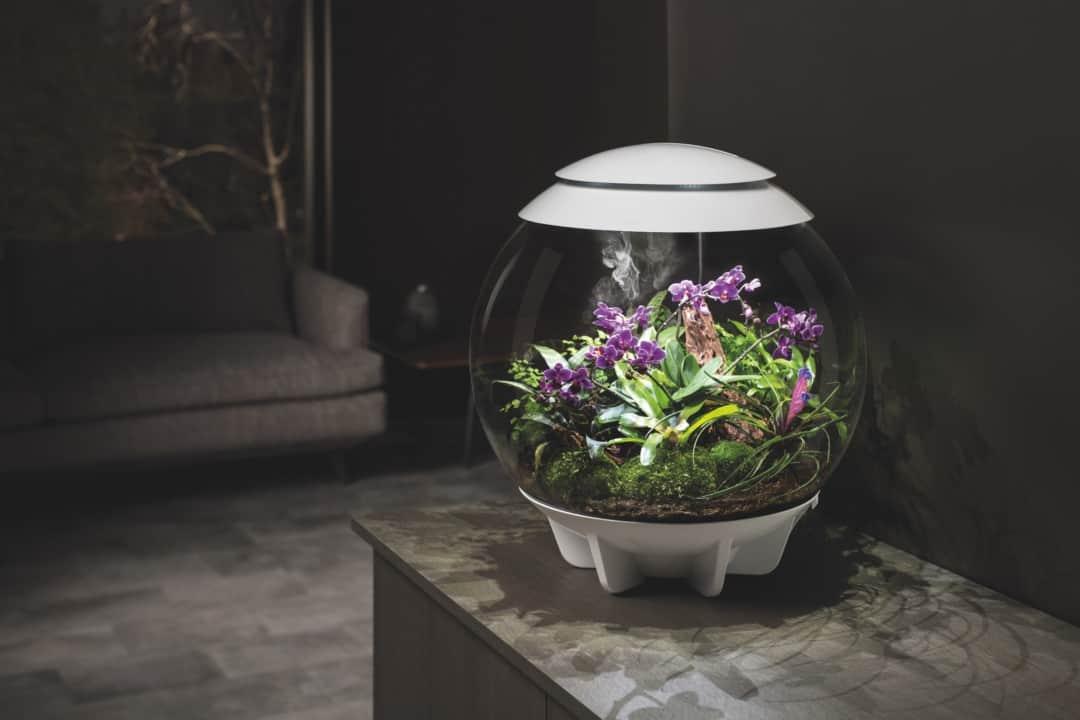 Mikrokosmos und Designobjekt: Ein Stück Natur Zuhause 1