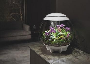 Mikrokosmos und Designobjekt: Ein Stück Natur Zuhause