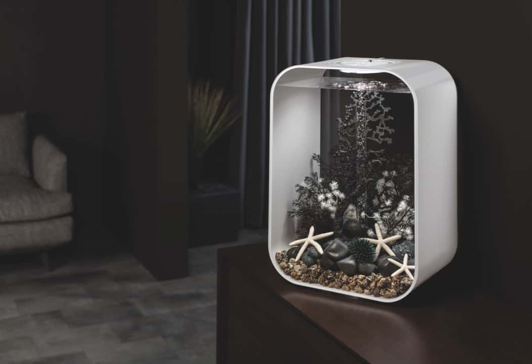 Mikrokosmos und Designobjekt: Ein Stück Natur Zuhause 2