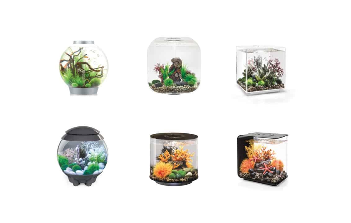 Mikrokosmos und Designobjekt: Ein Stück Natur Zuhause 3