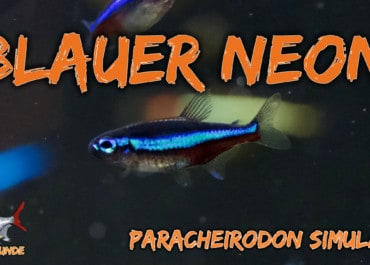 AQUaddicted! - Video Tipp: Der Blaue Neon im Portrait