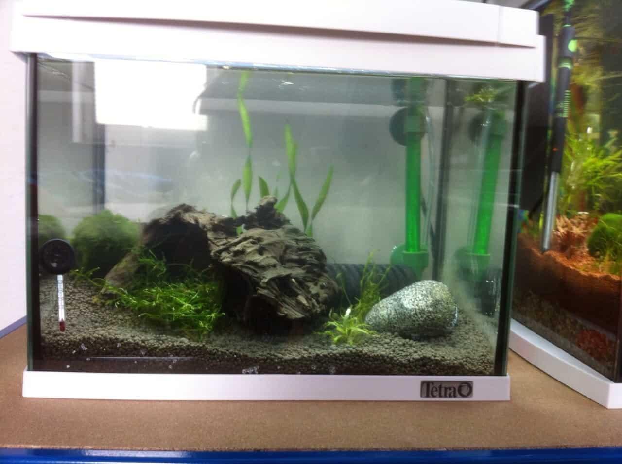 262: Garnelen im Aquarium halten - So machst du deinen Filter garnelensicher 3