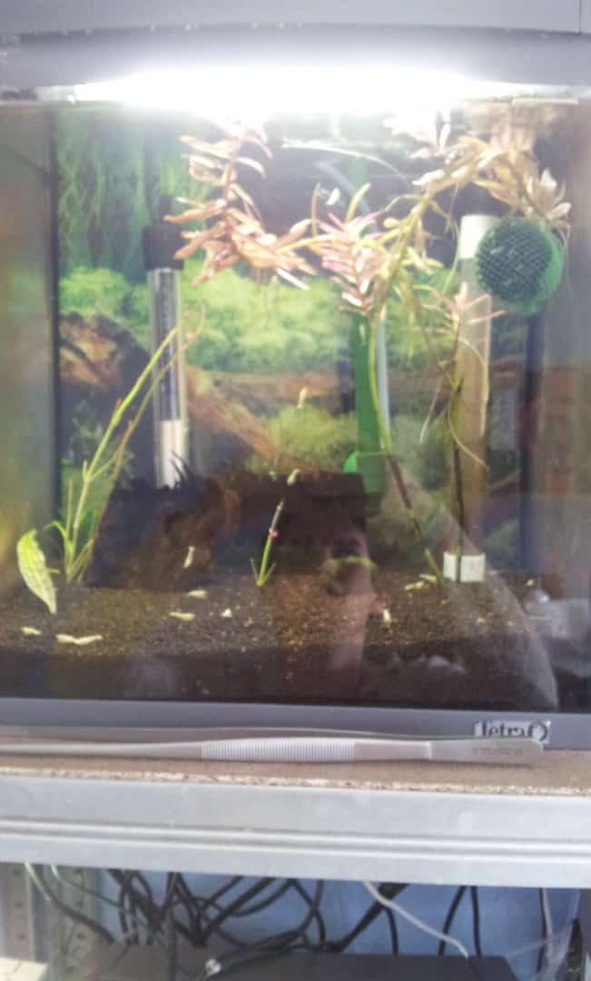 262: Garnelen im Aquarium halten - So machst du deinen Filter garnelensicher 11