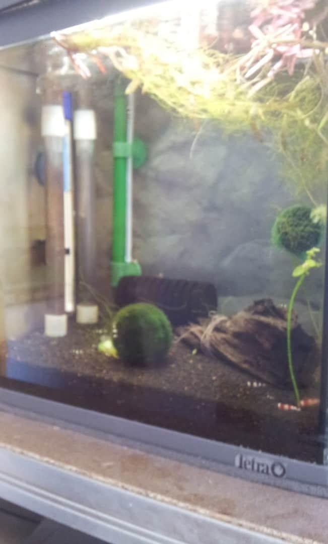 262: Garnelen im Aquarium halten - So machst du deinen Filter garnelensicher 16