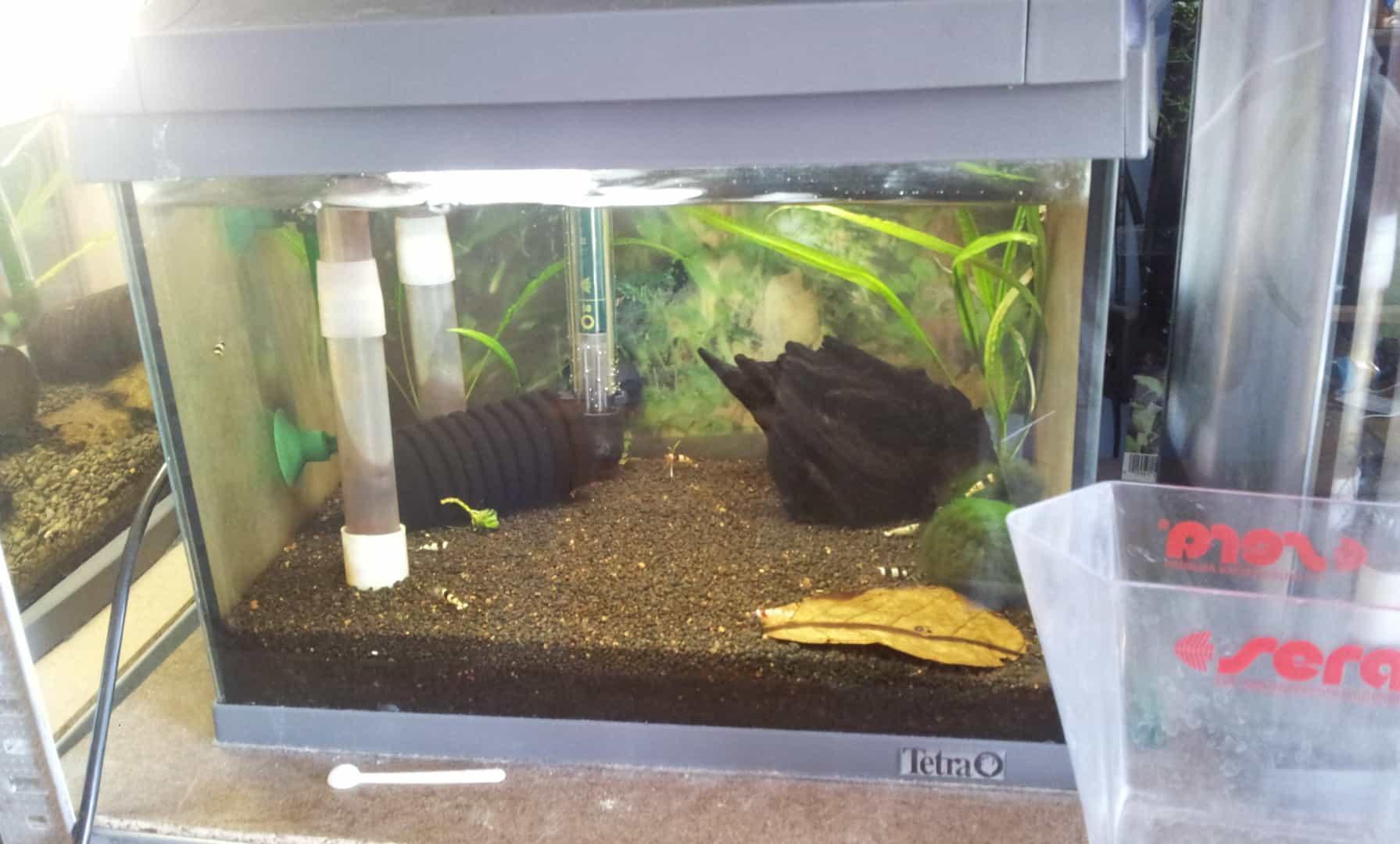 262: Garnelen im Aquarium halten - So machst du deinen Filter garnelensicher 9