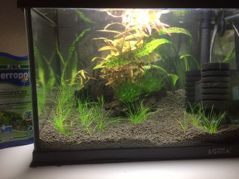 262: Garnelen im Aquarium halten - So machst du deinen Filter garnelensicher 8
