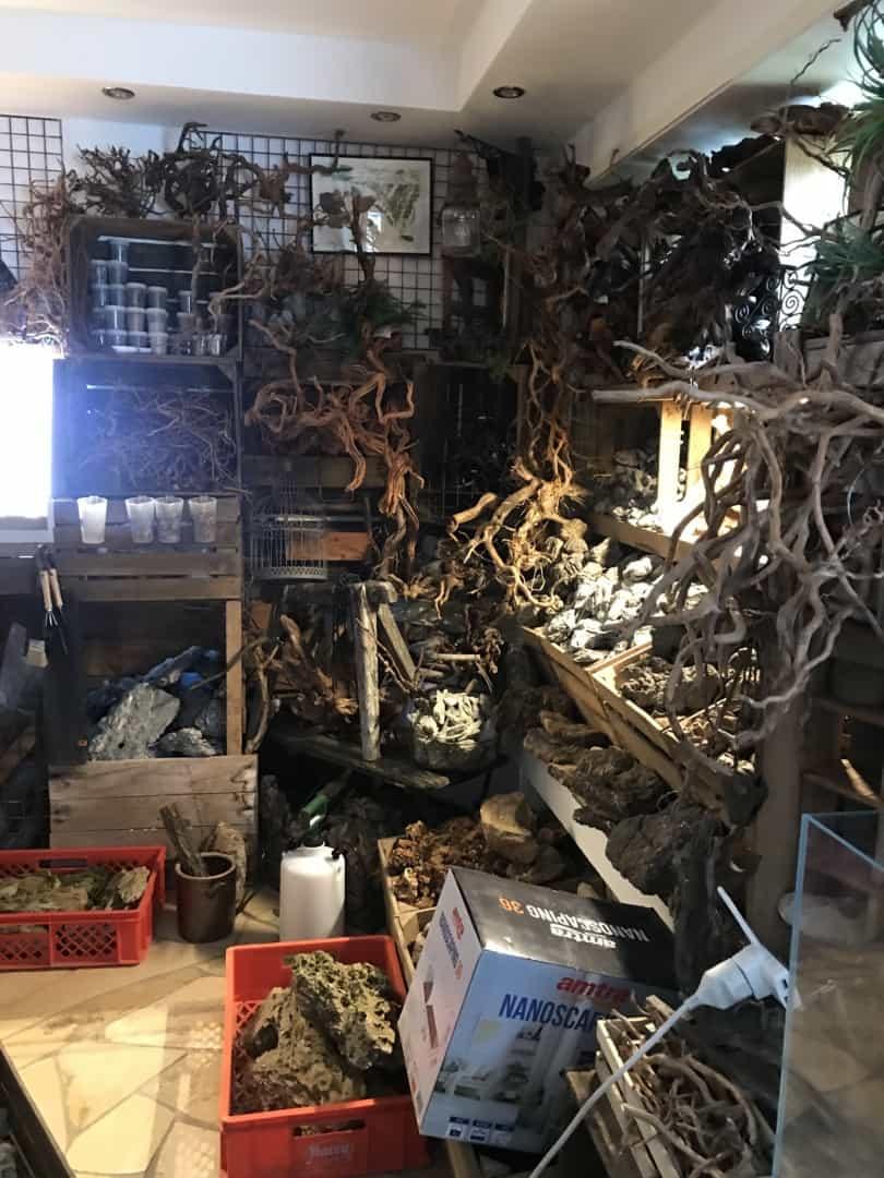 261: Nature Escape - Galerie und Ort der kreativen Entfaltung (Florian Neumann und Adrian Lichnowski) 4
