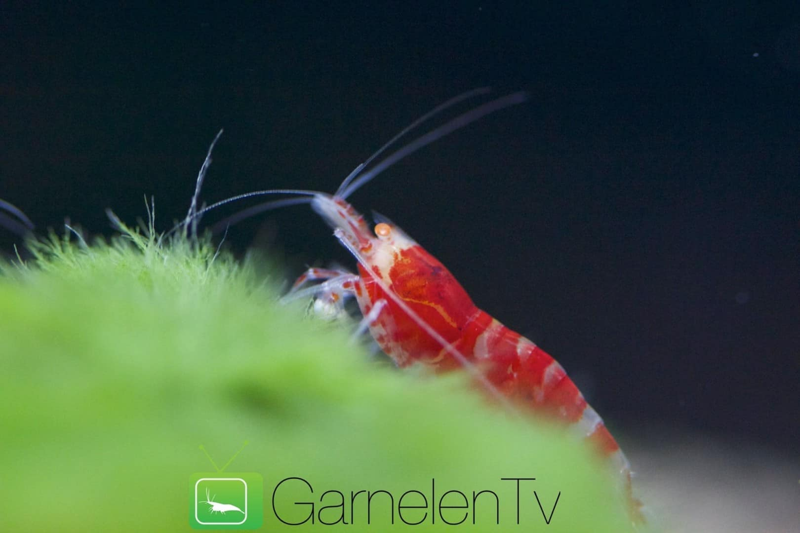 262: Garnelen im Aquarium halten - So machst du deinen Filter garnelensicher 5