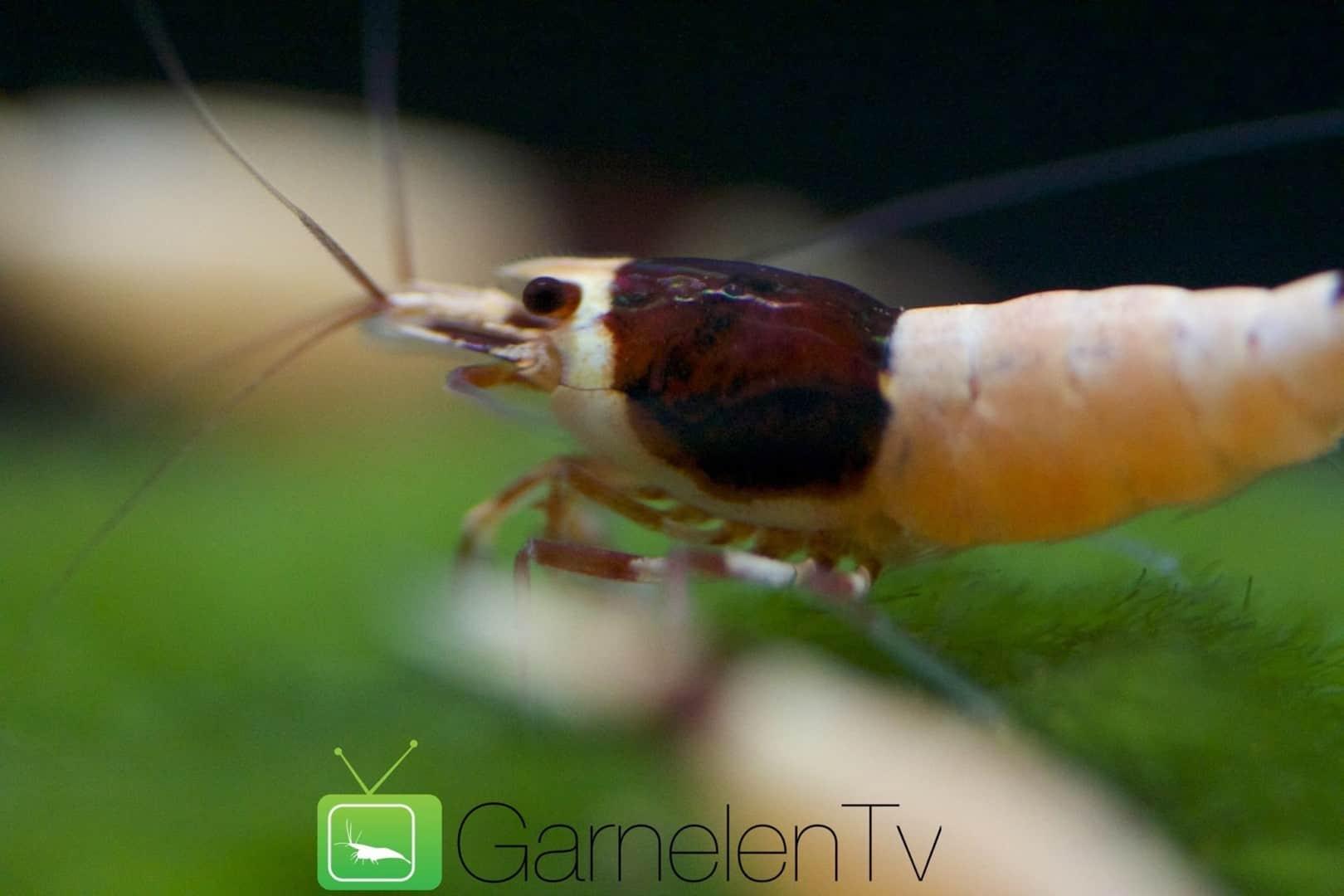 262: Garnelen im Aquarium halten - So machst du deinen Filter garnelensicher 10