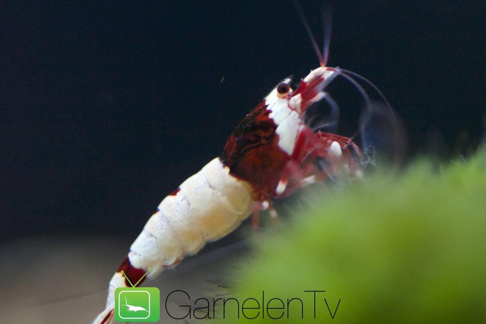 262: Garnelen im Aquarium halten - So machst du deinen Filter garnelensicher 14