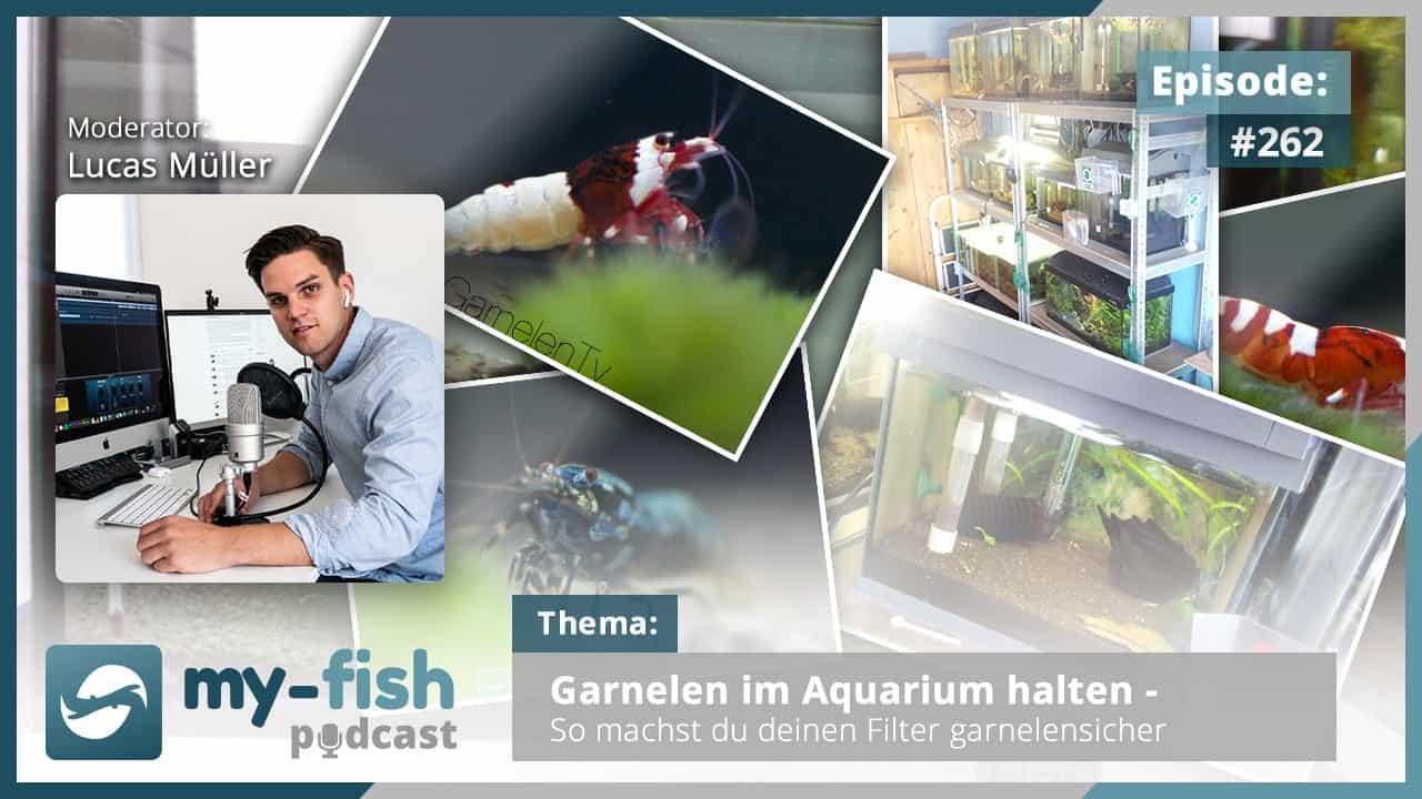 262: Garnelen im Aquarium halten - So machst du deinen Filter garnelensicher 1