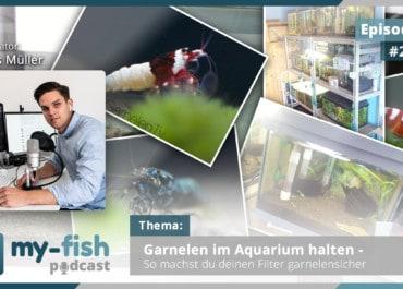 Podcast Episode #262: Garnelen im Aquarium halten - So machst du deinen Filter garnelensicher