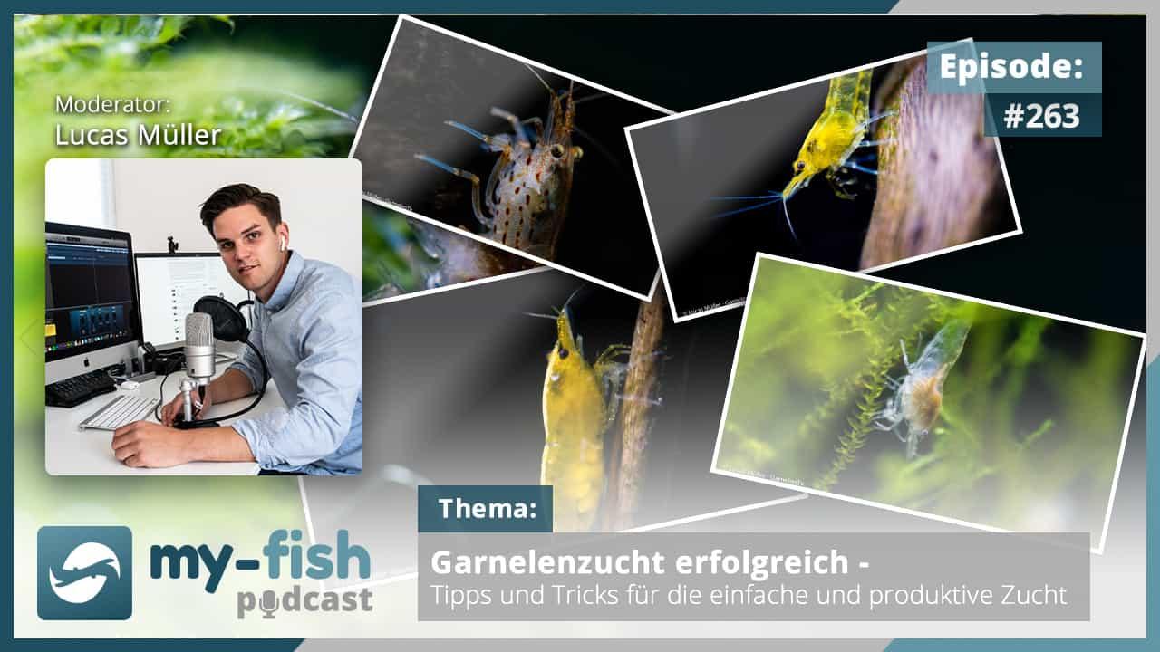 274: Der my-fish Podcast Jahresrückblick 2020 - 45 Episoden mit interessanten Personen aus der Aquaristik 13