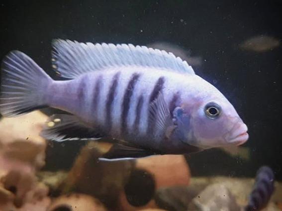 267: Die Filterung im Aquarium - 8 Tipps zur Auswahl, Pflege und Optimierung (Dukes Aquaristikexperimente) 3