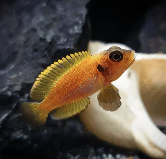 267: Die Filterung im Aquarium - 8 Tipps zur Auswahl, Pflege und Optimierung (Dukes Aquaristikexperimente) 4